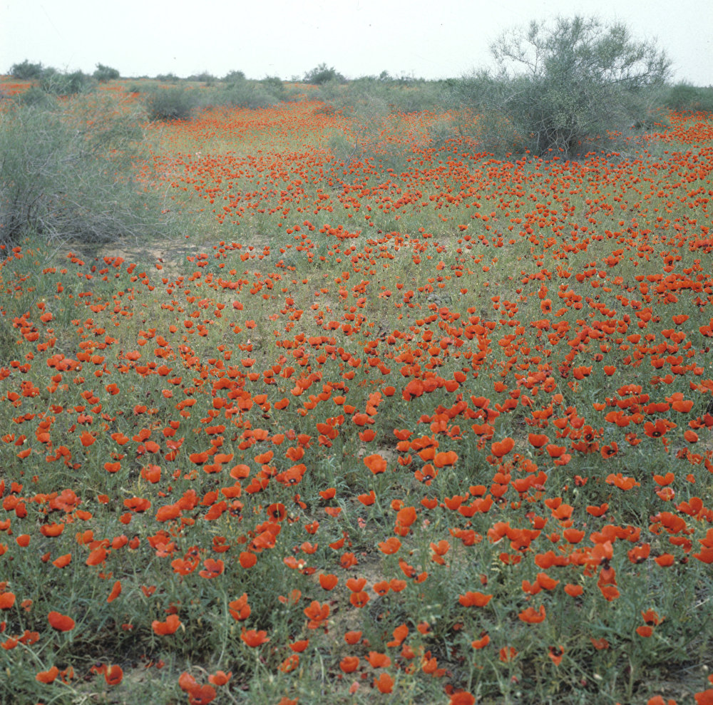 Against the Laws of Nature: How the Desert Blooms