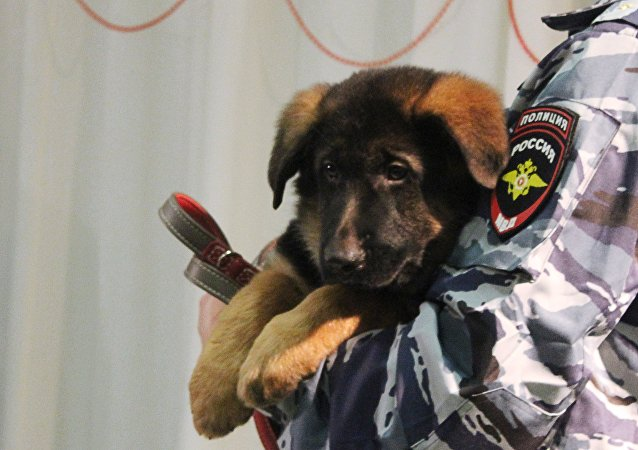Puppy Dobrynya handed over as gift to French police