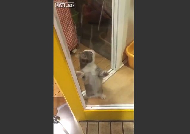 Cute cat overwhelmed with Happiness over owner's return