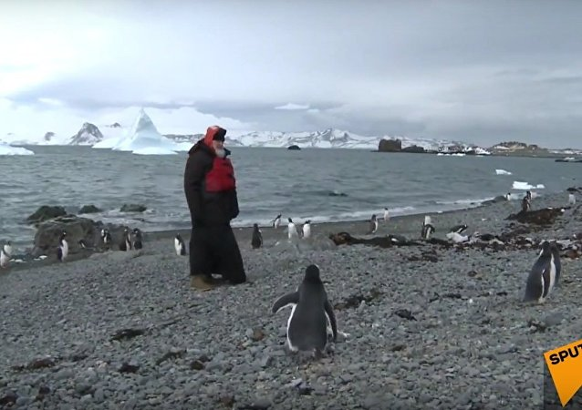 Orthodox Patriarch Kirill Meets Penguins in Antarctica