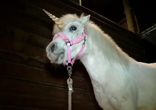 YOUTUBE screenshot- Runaway unicorn captured in California