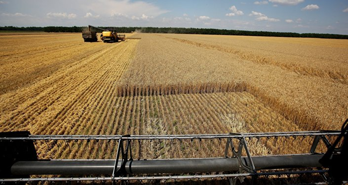 Harvesting wheat at the fields of the Lebyage-Chepiginskoe JSC in Timashevsky District, Krasnodar Territory.