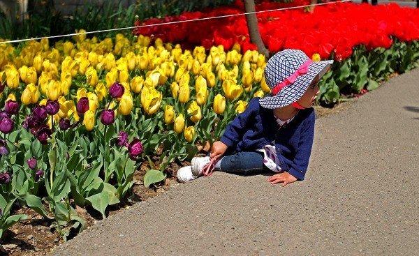Tulips in Tehran
