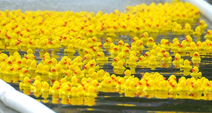 Rubber ducks float in a pond.