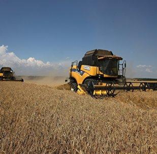 Harvesting wheat at the fields of the Lebyage-Chepiginskoe JSC in Timashevsky District, Krasnodar Territory