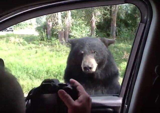 Kids scream as Bear opens van door
