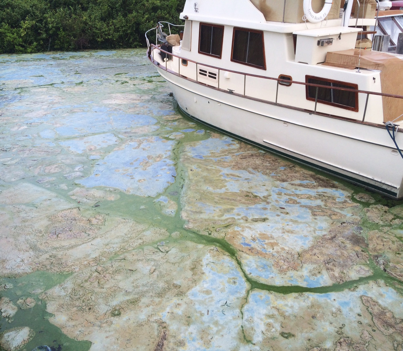 Florida Toxic Algae - July 2016