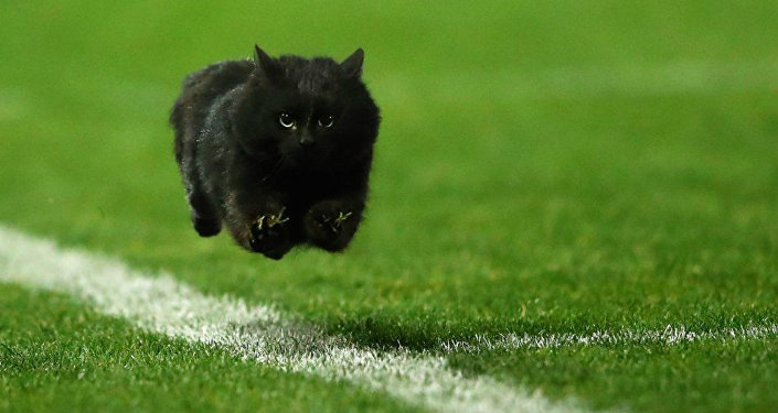 A black cat flies down a rugby league field in Australia