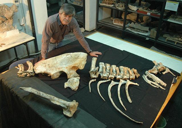 Dr. Rodolfo Anibal Coria a paleontologist with the Murusraptor Barrosaensis