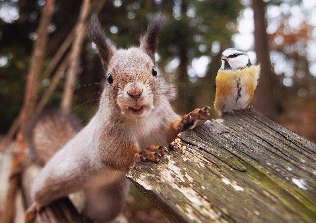 Stunning Wildlife Portraits: Animals Show Raw Emotions
