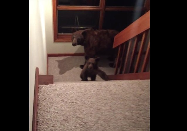 Home Visit from Mama Bear and Cub