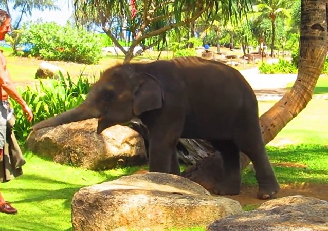 Little Elephant at JW Marriott Hotel Phuket (Chang Noi 555)