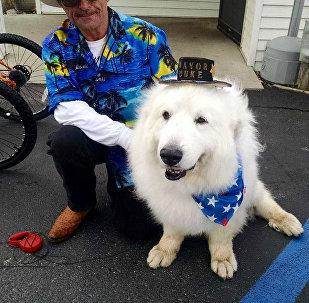 Dog Becomes Mayor
