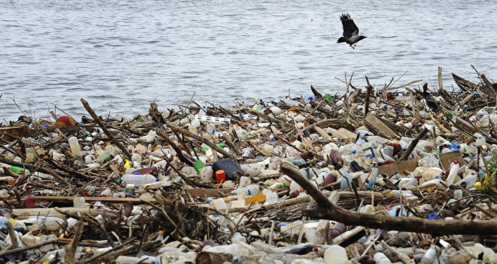 A bird flies past dumped plastic bottles and other garbage
