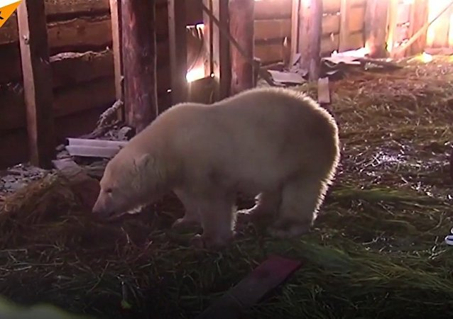 Mod Russia Saves a Little Bear in the Arctic