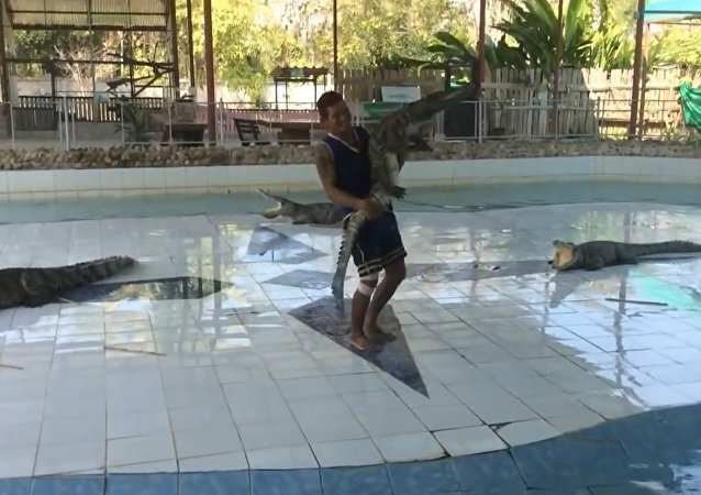 Crazy Man Dances with Crocodile
