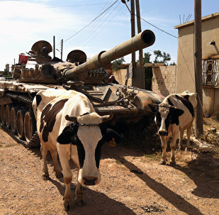 Cows standing next to a Syrian army tank in Dabaa, north of Qusayr, in Syria's central Homs province (File)