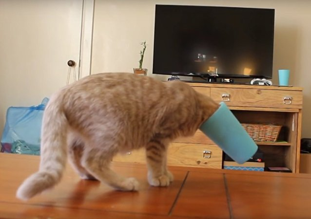Kitten learning about cups