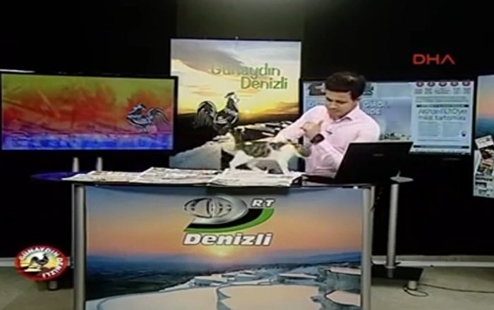 Stray Cat Interrupts Live TV Show in Turkey
