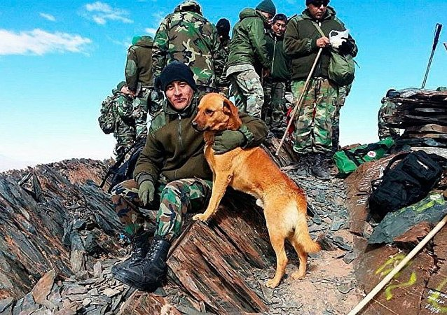 Army Sergeant amounted to a dog in Argentina