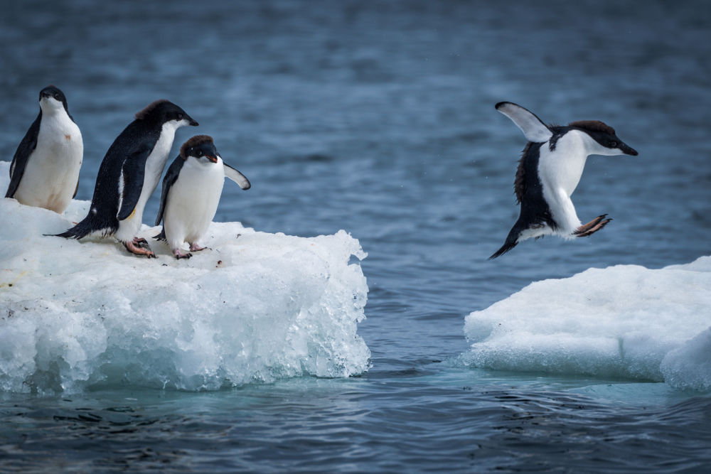 Wild Wonders of Antarctica, Slated for Biggest Marine Reserve