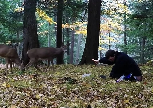 Man unbelievably entices wild deer from the forest