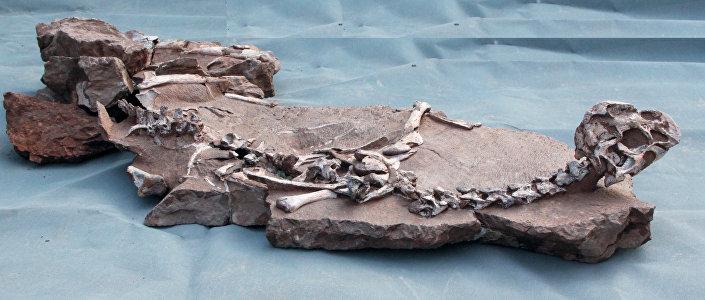 Tongtianlong skeleton