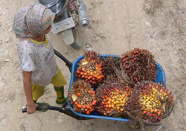 This picture taken on September 16, 2015 shows a girl pushing a cart while working at a palm oil plantation area in Pelalawan, Riau province in Indonesia's Sumatra island.