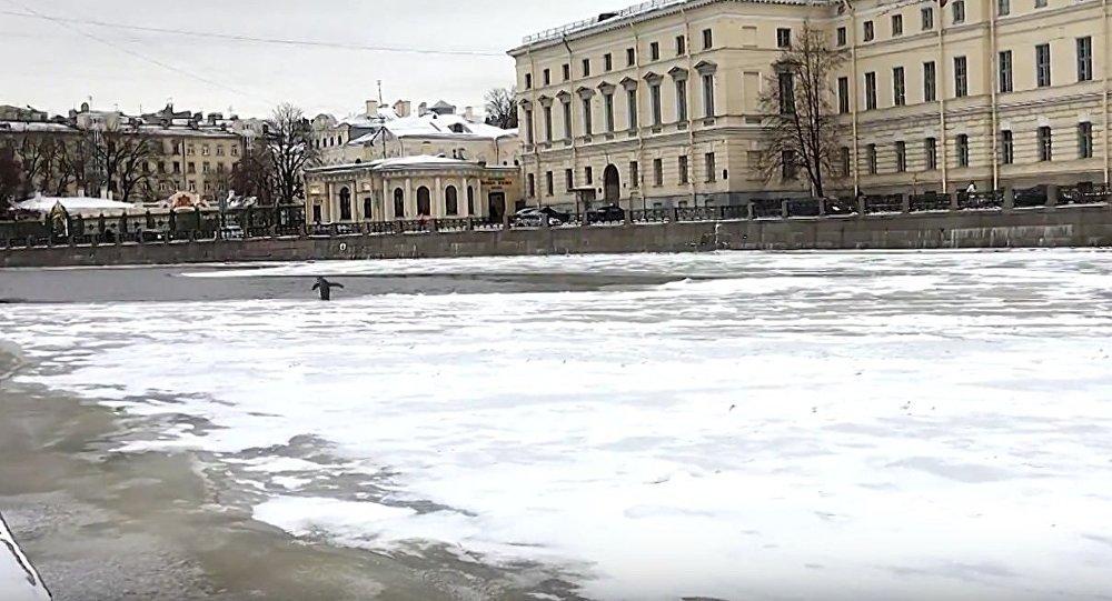 Penguin in St. Petersburg