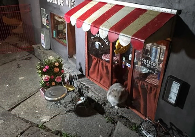 Mouse Restaurant in Malmö