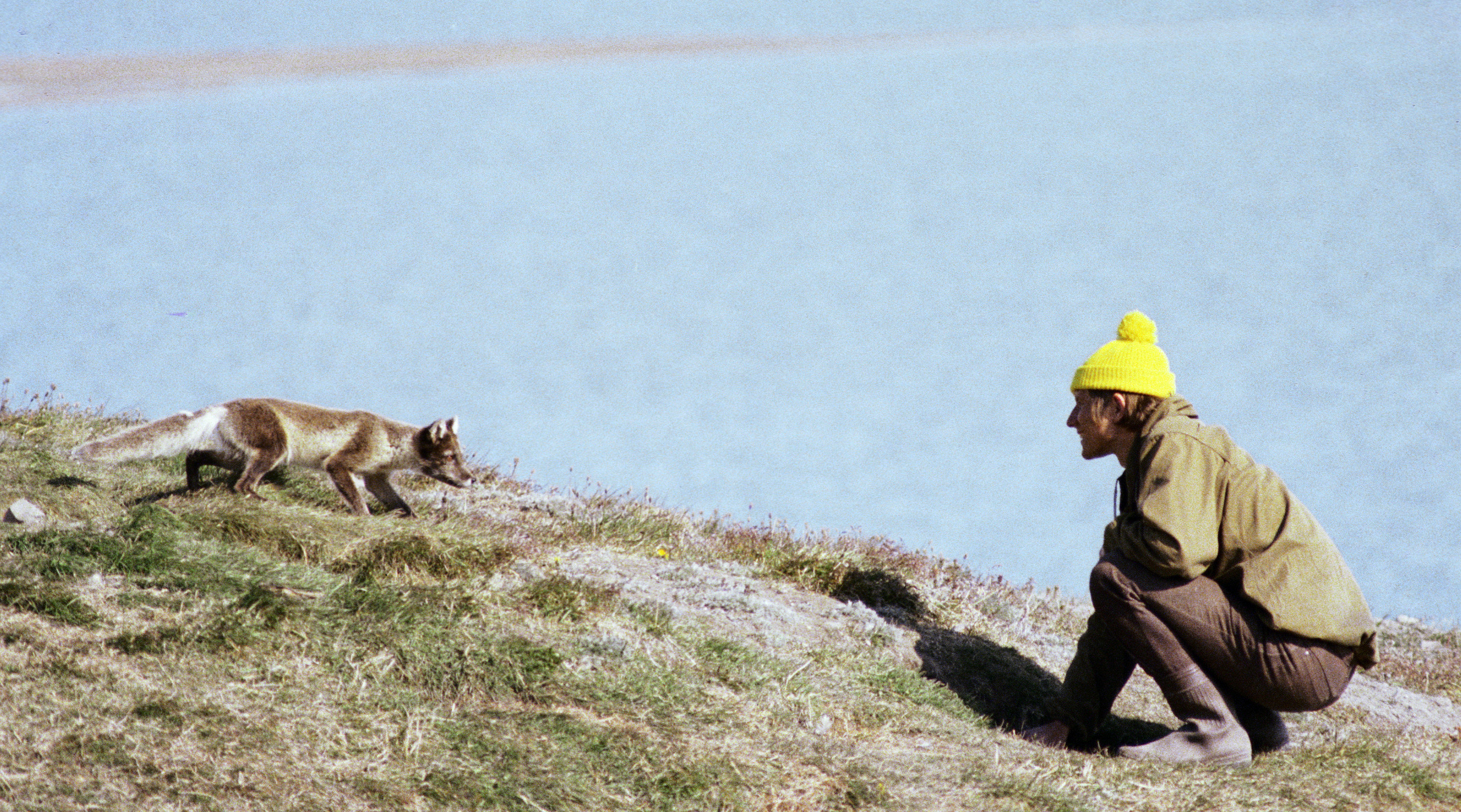Biologist monitoring polar fox in the Wrangel Island reserve