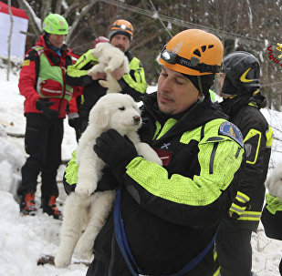 Firefighters hold three puppies that were found alive in the rubble of the avalanche-hit Hotel Rigopiano, near Farindola, central Italy, Monday, Jan. 22, 2017. Emergency crews digging into an avalanche-slammed hotel were cheered Monday by the discovery of three puppies who had survived for days under tons of snow, giving them new hope for the 23 people still missing in the disaster.