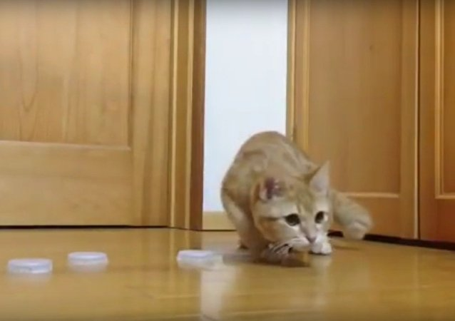 This Cat Has Goalie-like Reflexes