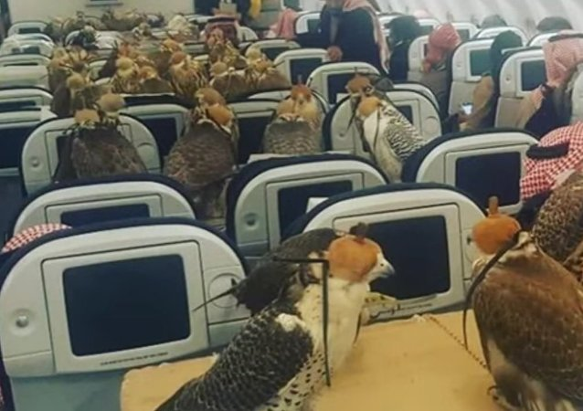 Saudi prince bought ticket for his 80 hawks