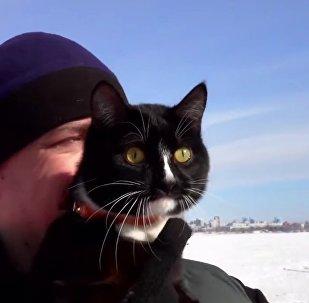 Meet Graf The Traveling Cat