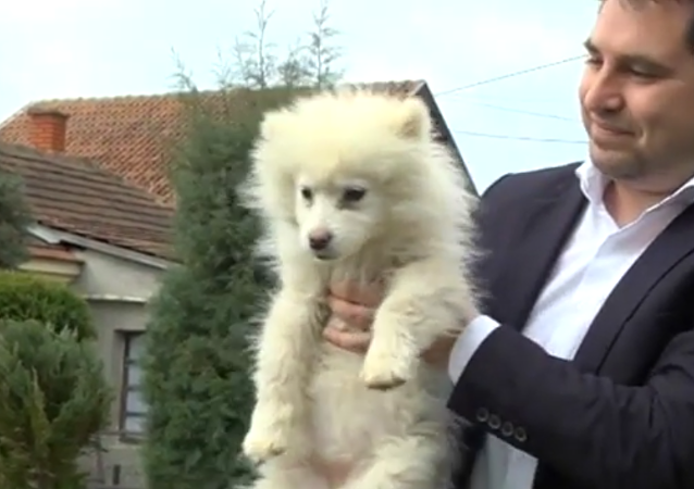 A Pooch May Become Mayor's Assistant in Serbia