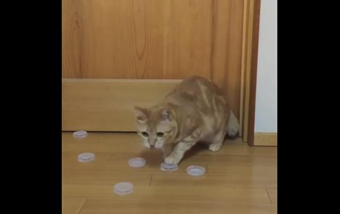 Kitty Practices Goalie Skills