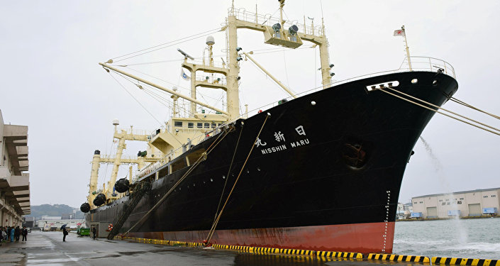 Japanese whaling vessel the Nisshin Maru returns to the Shimonoseki port in southwestern Japan after it and two other vessels hunted 333 minke whales in the Antarctic Ocean