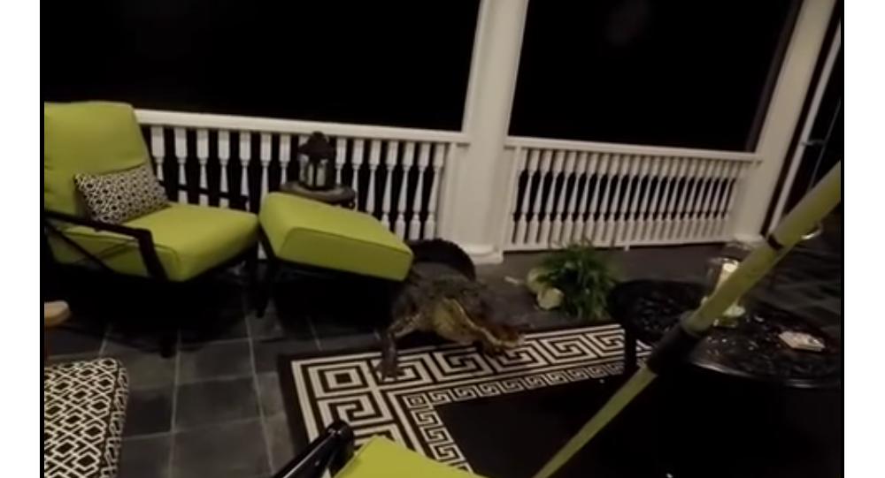 Mount Pleasant Alligator Caught on Video