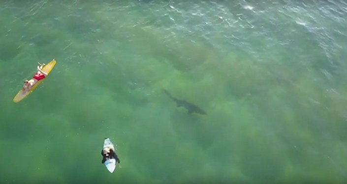 Aerial Footage Captures Shark Lurking Below Surfers at Kiama