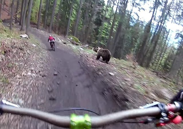Bear on the Bikepark Malino Brdo SLOVAKIA