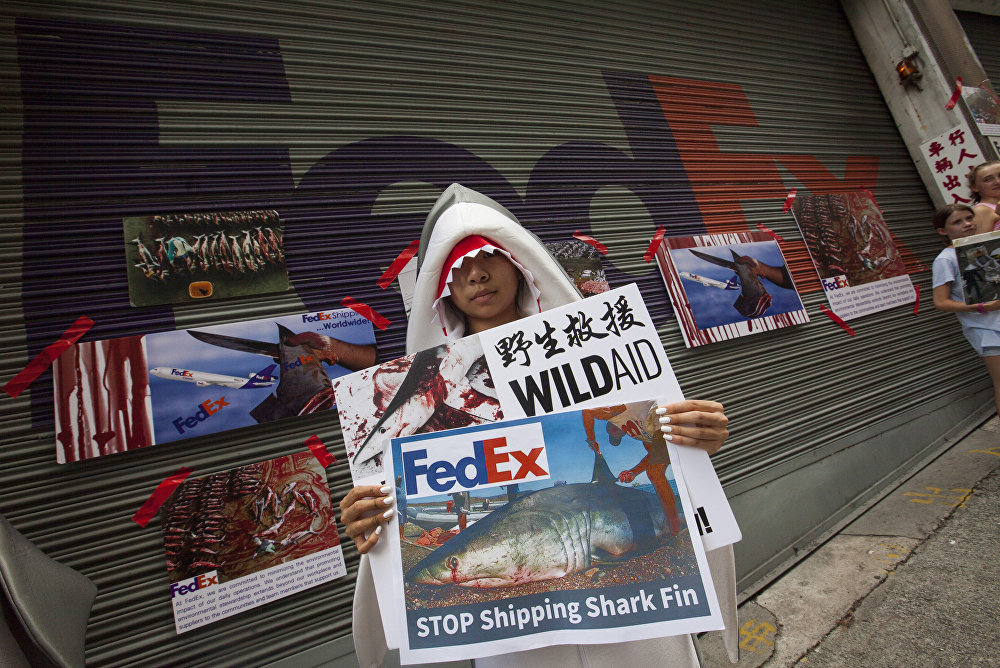 Pressure increases on FedEx and US Airlines to ban shark fin imports on planes