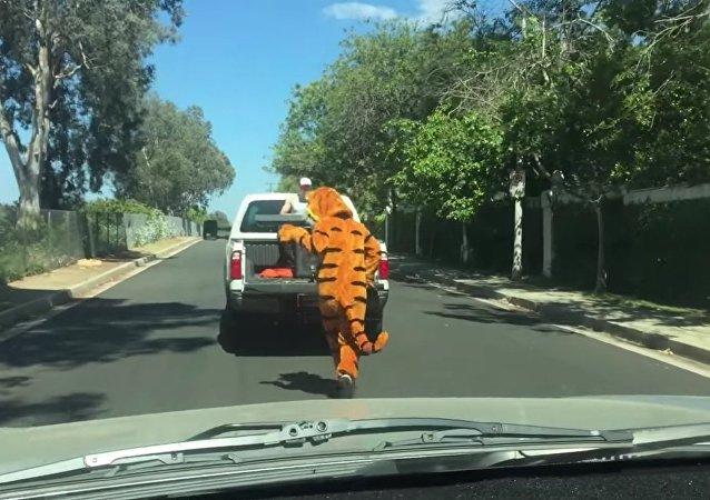 Tiger Sighting In Lake Balboa