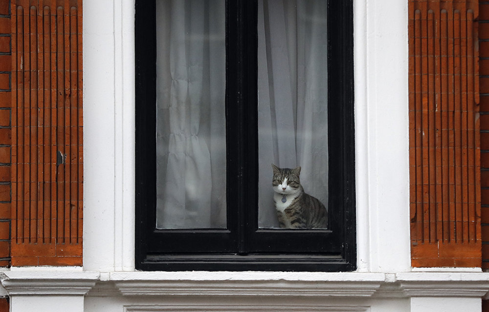 Embassy Cat: Assange's Mysterious Feline Companion
