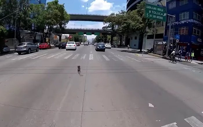Chasing a Dog in Mexico City