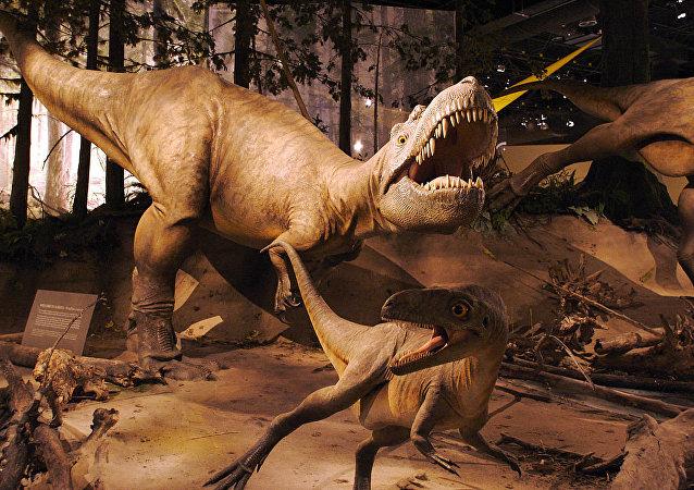 Albertosaurus models, Royal Tyrell Museum