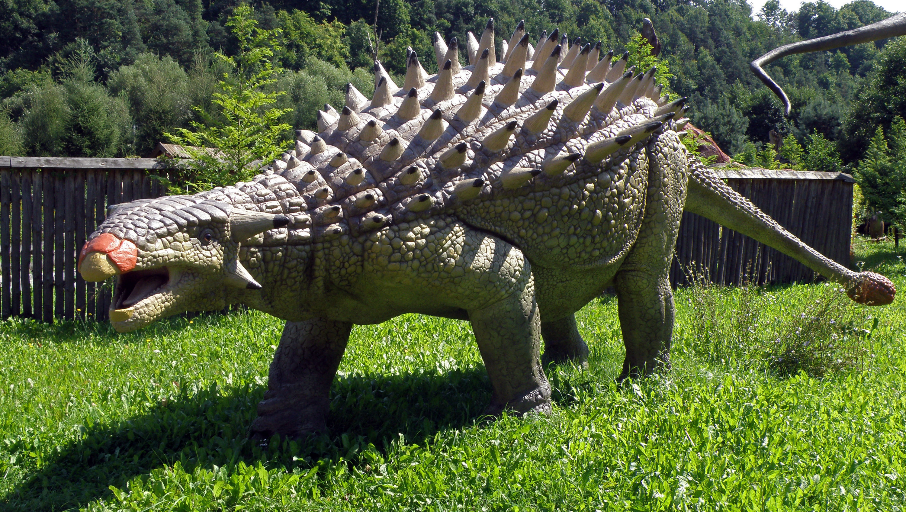 Ankylosaurus, a genus of a heavily armored dinosaur with a large club-like protrusion at the end of its tail. The nodosaur is an ancient cousin of the better-known ankylosaurus