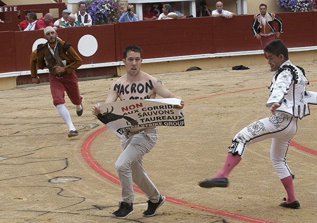 An anti-bullfighting protester with the words written on his chest in French, 'Macron (referring to the French President Emmanuel Macron) you can stop this' and holding a sign that reads, 'No to the Corrida, save the bulls-Vegan strike group' is chased after jumping into the arena following the slaying of the first bull during the Corrida Goyesque bullfight in Bayonne, southwest France on August 15, 2017