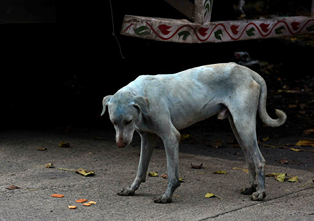 This photo taken on August 17, 2017 shows a stray dog with a light blue hue on a street near the Kasadi River in the Taloja industrial zone in Mumbai