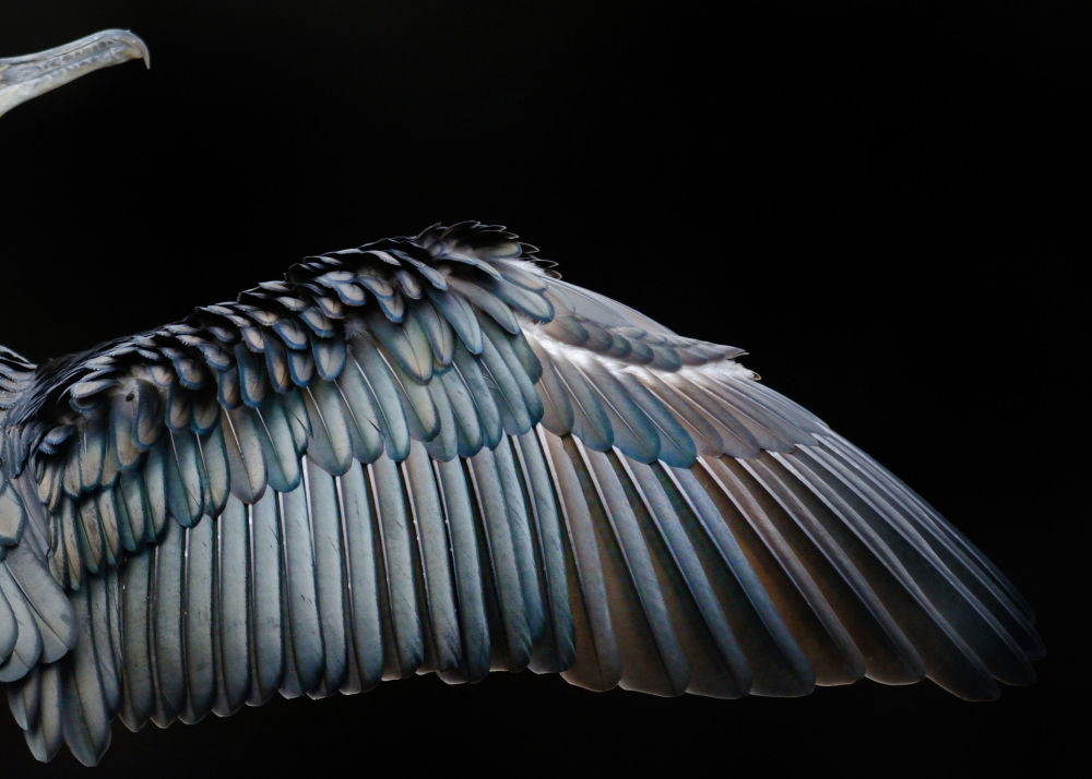 Feathered Frenzy: Winners of the 2017 Bird Photographer of the Year Contest
